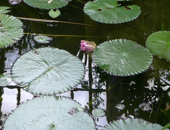 Alfred Heilbronn botanischer Garten - Bildergalerie